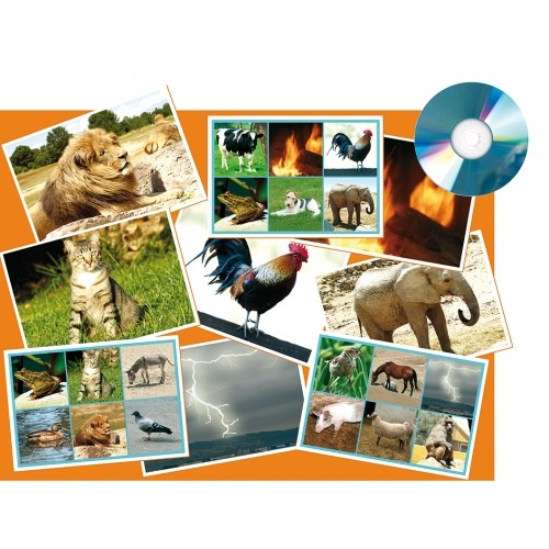 CD BINGO SONORO ANIMALES